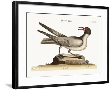 The Laughing Gull, 1749-73-Mark Catesby-Framed Art Print