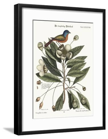 The Painted Finch, 1749-73-Mark Catesby-Framed Art Print