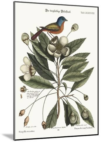 The Painted Finch, 1749-73-Mark Catesby-Mounted Giclee Print