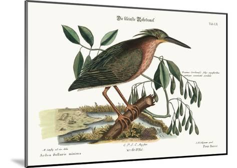 The Small Bittern, 1749-73-Mark Catesby-Mounted Giclee Print