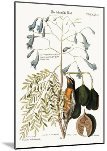 The Bahama Finch, 1749-73-Mark Catesby-Mounted Giclee Print