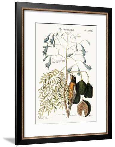 The Bahama Finch, 1749-73-Mark Catesby-Framed Art Print