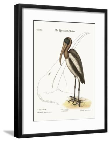 The Wood Pelican, 1749-73-Mark Catesby-Framed Art Print