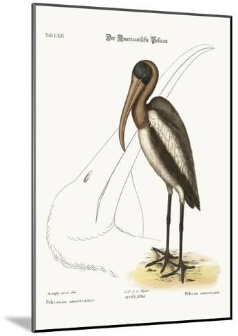 The Wood Pelican, 1749-73-Mark Catesby-Mounted Giclee Print