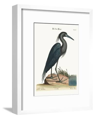 The Blue Heron, 1749-73-Mark Catesby-Framed Art Print