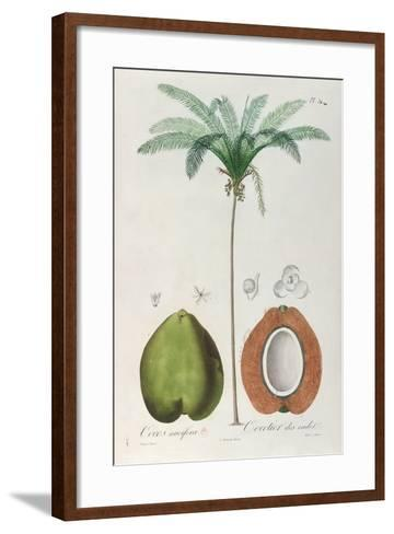Coconuts and Coconut Tree (Palm Tree)-Louis Michel Dumesnil-Framed Art Print