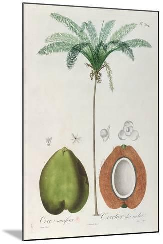 Coconuts and Coconut Tree (Palm Tree)-Louis Michel Dumesnil-Mounted Giclee Print