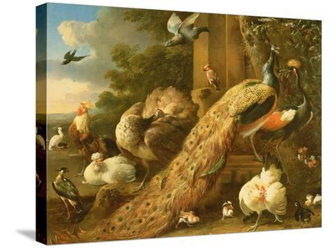 Peacock, Parakeet, Pelican, Crane and Poultry-Melchior de Hondecoeter-Stretched Canvas Print