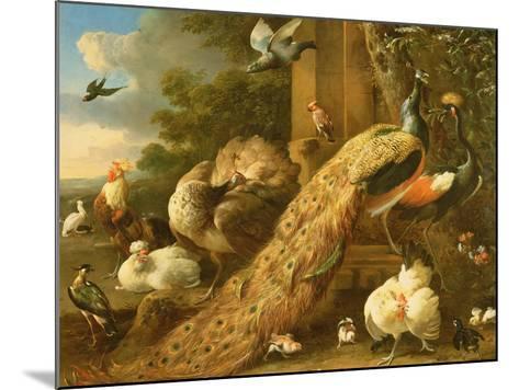 Peacock, Parakeet, Pelican, Crane and Poultry-Melchior de Hondecoeter-Mounted Giclee Print