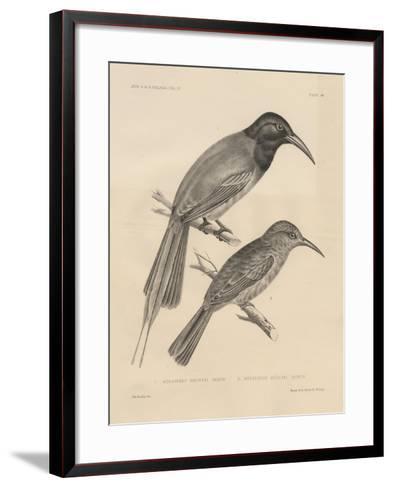 1. Meropogan Breweri and 2. Meropiscus Mulleri, Litho by J.T. Bowen, 1850-Otto Koehler-Framed Art Print
