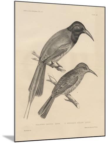 1. Meropogan Breweri and 2. Meropiscus Mulleri, Litho by J.T. Bowen, 1850-Otto Koehler-Mounted Giclee Print