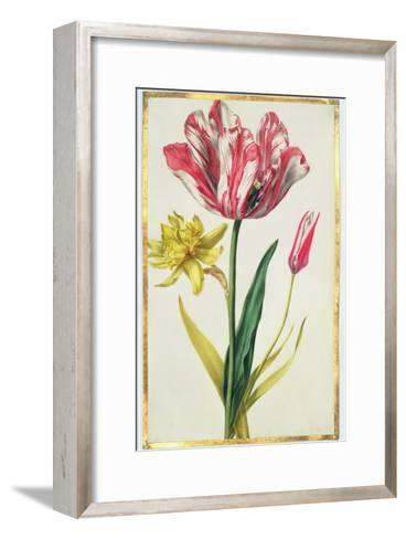 Daffodil and Tulip, C.1675-Nicolas Robert-Framed Art Print