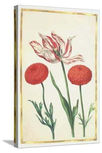Tulip and Dahlias, C.1675-Nicolas Robert-Stretched Canvas Print
