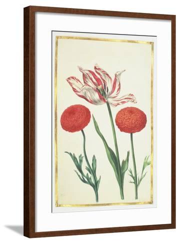 Tulip and Dahlias, C.1675-Nicolas Robert-Framed Art Print