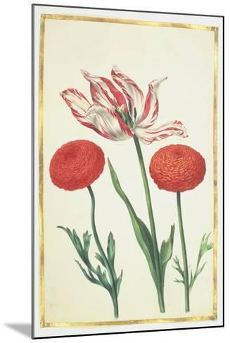 Tulip and Dahlias, C.1675-Nicolas Robert-Mounted Giclee Print