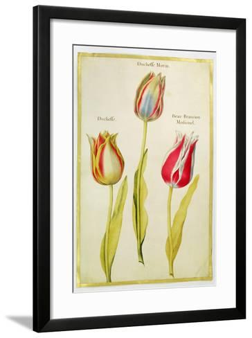 Tulips, C.1675-Nicolas Robert-Framed Art Print
