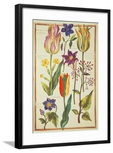 Flower Studies-Nicolas Robert-Framed Art Print