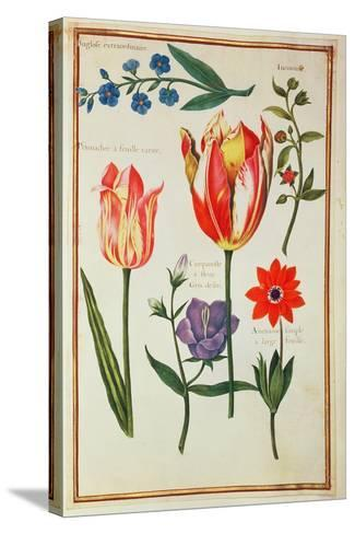 Flower Studies-Nicolas Robert-Stretched Canvas Print