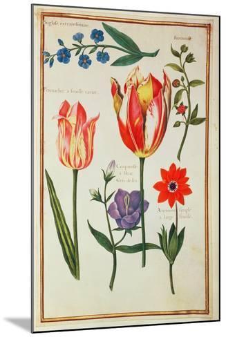 Flower Studies-Nicolas Robert-Mounted Giclee Print