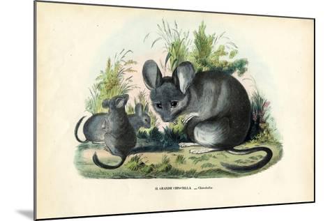 Chinchilla, 1863-79-Raimundo Petraroja-Mounted Giclee Print