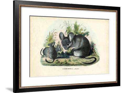 Chinchilla, 1863-79-Raimundo Petraroja-Framed Art Print