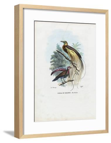 Bird of Paradise, 1863-79-Raimundo Petraroja-Framed Art Print