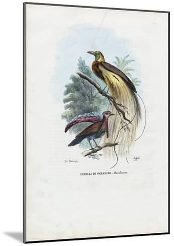 Bird of Paradise, 1863-79-Raimundo Petraroja-Mounted Giclee Print