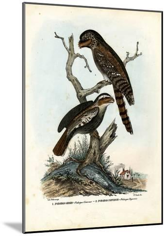 Papuan Frogmouth, 1863-79-Raimundo Petraroja-Mounted Giclee Print