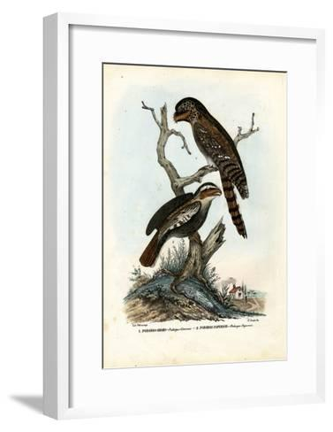 Papuan Frogmouth, 1863-79-Raimundo Petraroja-Framed Art Print