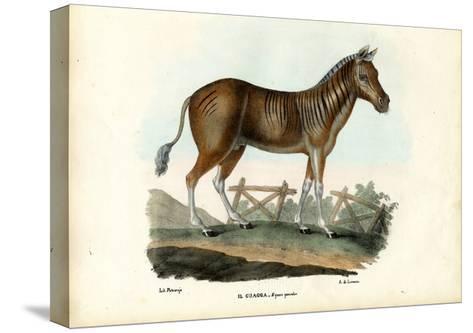 Quagga, 1863-79-Raimundo Petraroja-Stretched Canvas Print