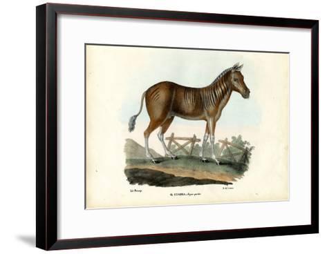 Quagga, 1863-79-Raimundo Petraroja-Framed Art Print