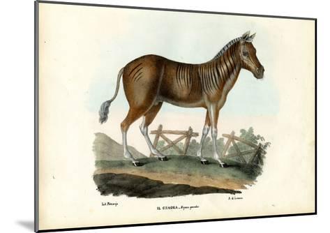 Quagga, 1863-79-Raimundo Petraroja-Mounted Giclee Print