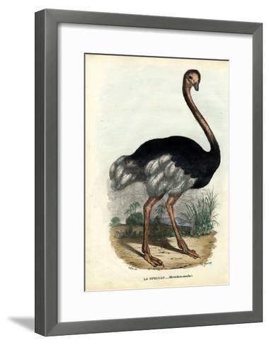 African Ostrich, 1863-79-Raimundo Petraroja-Framed Art Print