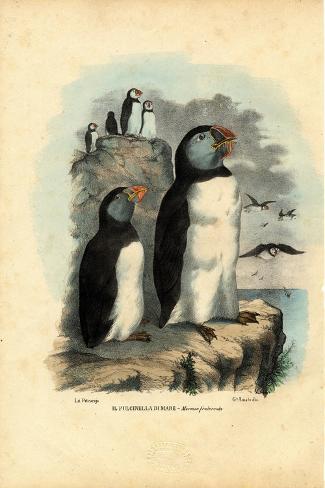 Atlantic Puffin, 1863-79-Raimundo Petraroja-Stretched Canvas Print