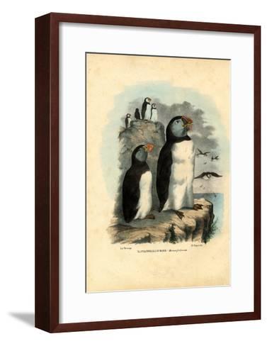 Atlantic Puffin, 1863-79-Raimundo Petraroja-Framed Art Print