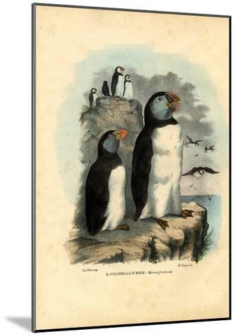 Atlantic Puffin, 1863-79-Raimundo Petraroja-Mounted Giclee Print
