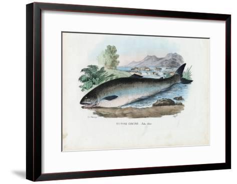 Atlantic Salmon, 1863-79-Raimundo Petraroja-Framed Art Print