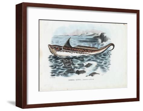 Rabbit Fish, 1863-79-Raimundo Petraroja-Framed Art Print