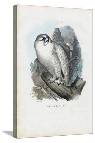 Snowy Owl, 1863-79-Raimundo Petraroja-Stretched Canvas Print