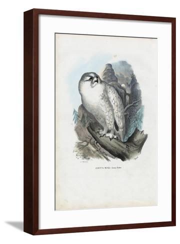Snowy Owl, 1863-79-Raimundo Petraroja-Framed Art Print