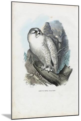 Snowy Owl, 1863-79-Raimundo Petraroja-Mounted Giclee Print