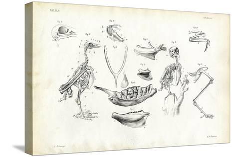 Anatomy, 1863-79-Raimundo Petraroja-Stretched Canvas Print
