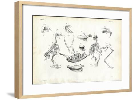 Anatomy, 1863-79-Raimundo Petraroja-Framed Art Print