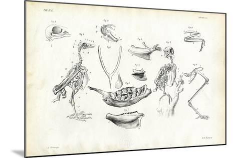 Anatomy, 1863-79-Raimundo Petraroja-Mounted Giclee Print