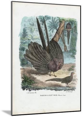 Argus Pheasant, 1863-79-Raimundo Petraroja-Mounted Giclee Print