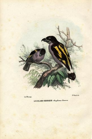 Broadbills, 1863-79-Raimundo Petraroja-Stretched Canvas Print