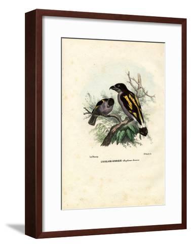 Broadbills, 1863-79-Raimundo Petraroja-Framed Art Print