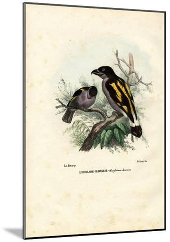 Broadbills, 1863-79-Raimundo Petraroja-Mounted Giclee Print
