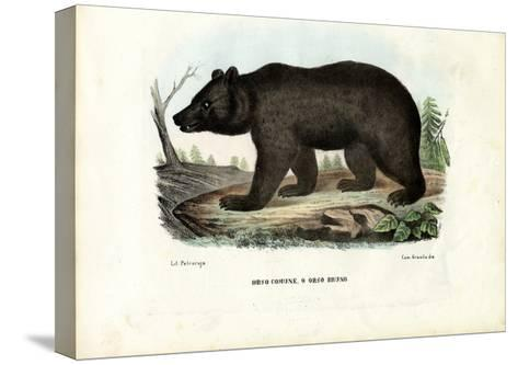 Brown Bear, 1863-79-Raimundo Petraroja-Stretched Canvas Print