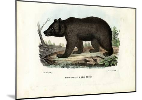 Brown Bear, 1863-79-Raimundo Petraroja-Mounted Giclee Print